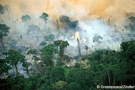 Amazonie-en-feu
